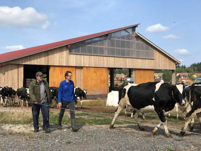 Bio-Bauer Philipp Danzeisen (l.) und sein Tagespraktikant, der Grünen-Landtagsabgeordnete Hermino Katzenstein, treiben das Vieh vom Stall auf die Weide. Foto: Elisabeth Murr-Brück